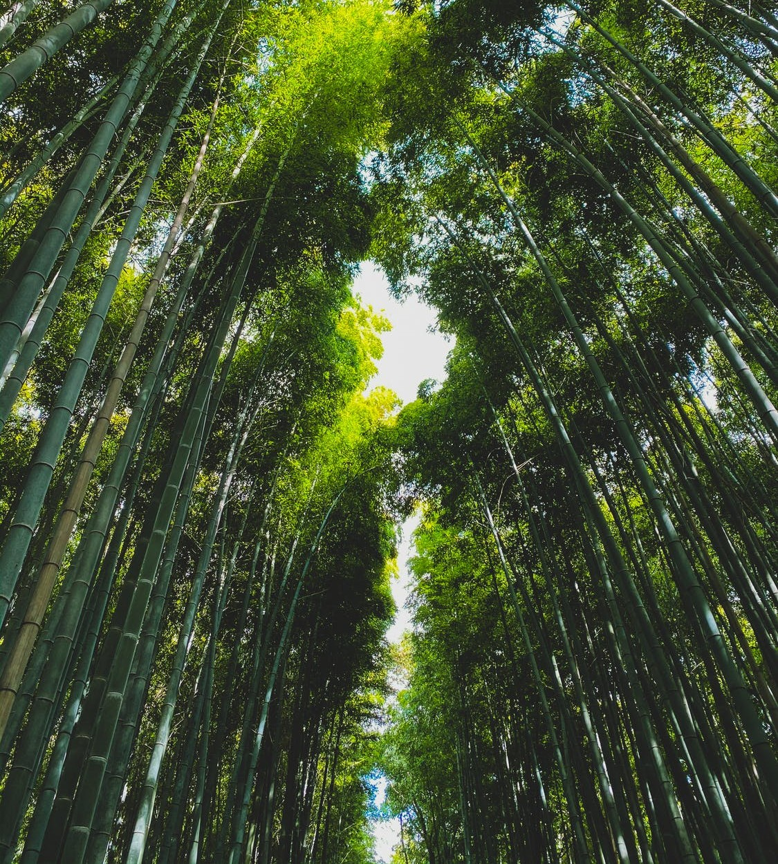 trees_tall